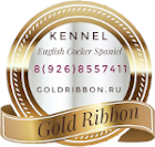 English Cocker Spaniel from Russia kennel Gold Ribbon