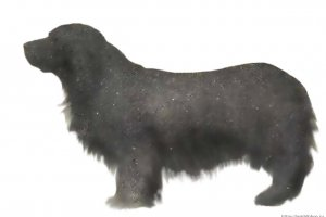 History of the English Cocker Spaniel breed